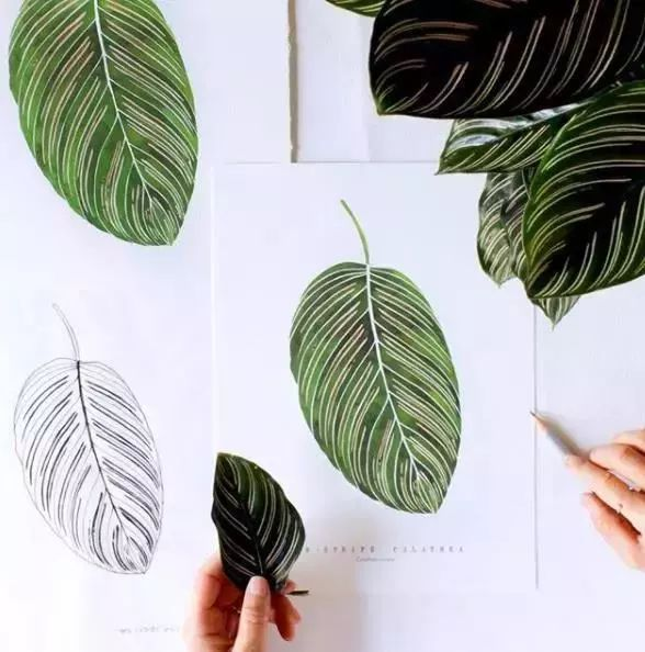 手帐素材 植物黑白