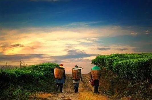 阿里京东网易们谁更能成为未来农业的引领者?