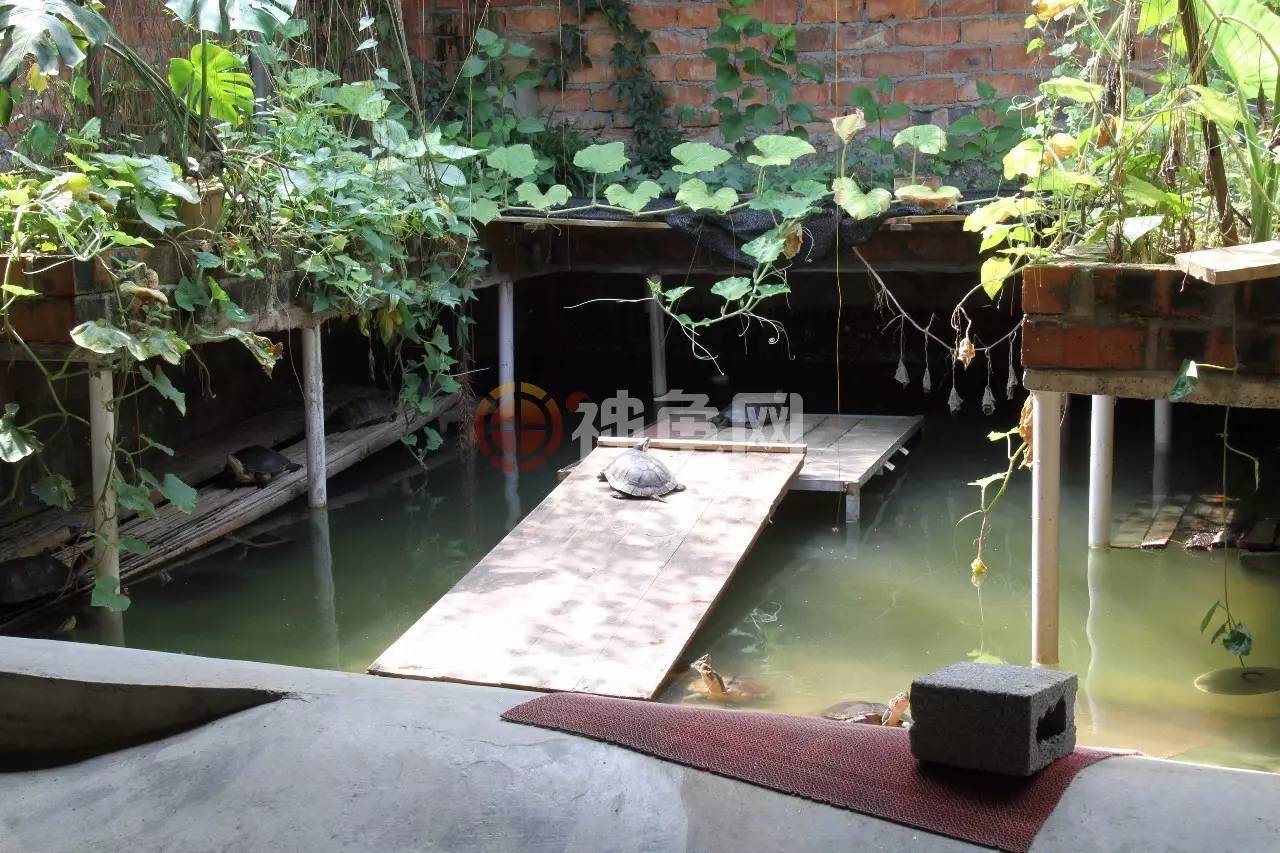 龟池建造术|石金钱龟室外池v中专广州市中专室内设计的学校图片