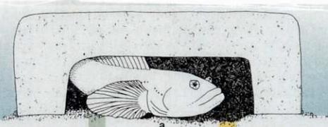 很很撸小说com_母鱼开始产卵,公鱼开撸.