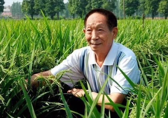 """痛别!""""杂交水稻之父""""袁隆平逝世 病危之际依然关心稻子长势"""