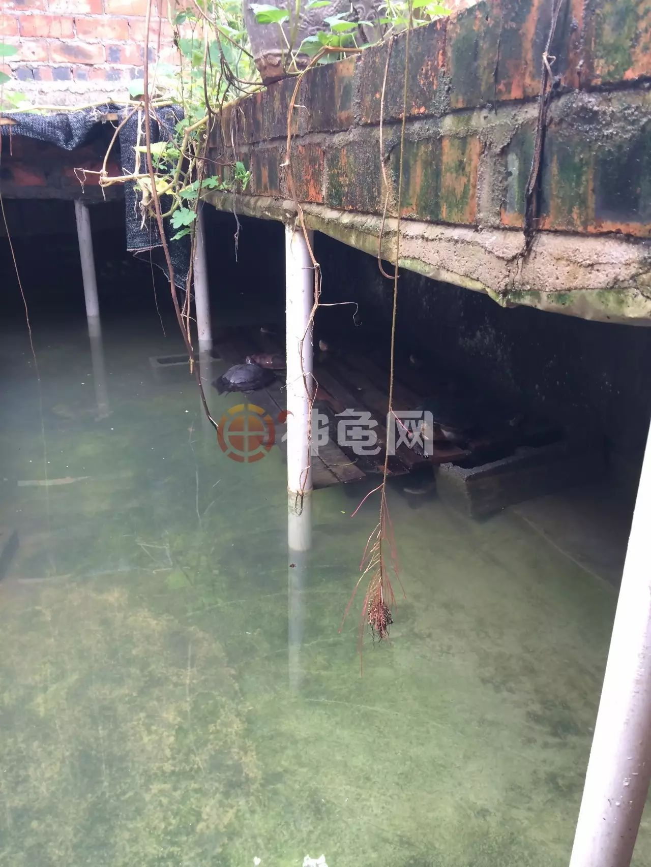 龟池建造术|石金钱龟室外池设计合肥三张建筑设计上海图片