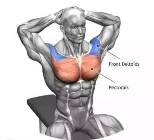 拉伸肌肉的原理是什么_全身肌肉拉伸动作图解