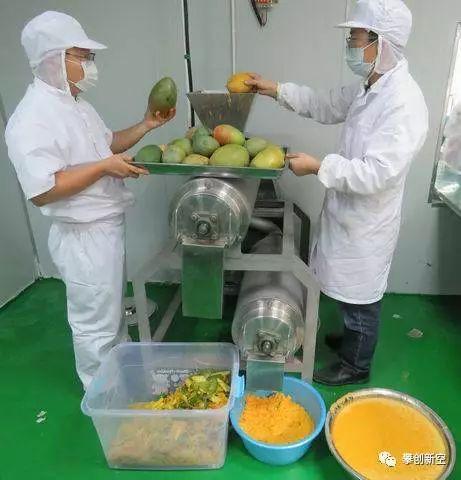 你能想象用攀枝花芒果制成牙膏 、护肤霜  、泡菜吗?本土专家已经在研制啦!