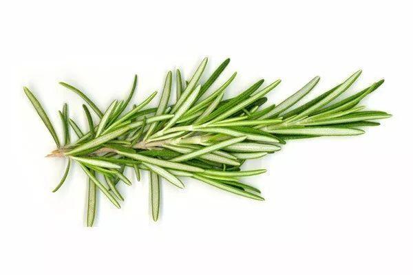 护肤 | 花草也可以用来DIY护肤