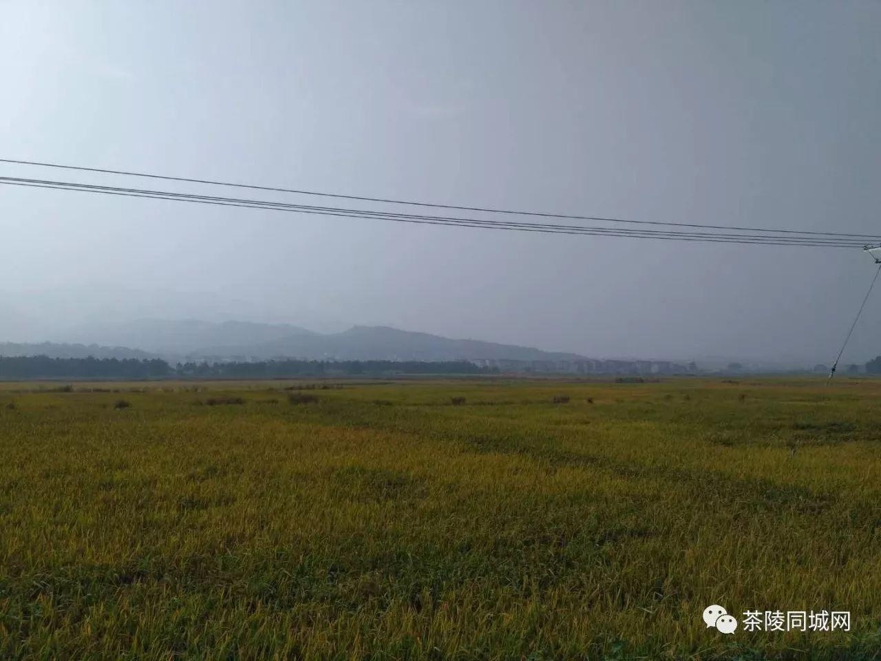 【茶陵农村原创】又临重阳