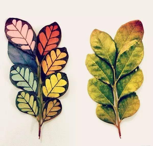 教育 正文  秋叶,最美最好玩 随着秋意渐浓,小小的树叶开始掉落.图片