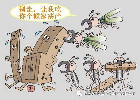 南京除白蚁