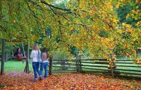 旅游 正文  飞猪旅行摄影12群—小乔《湖光山水色》 秋天的树没有了夏