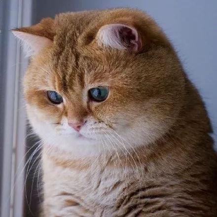 这么个坐姿和竖耳朵的样子,说不定是只白色大肥猫呢?