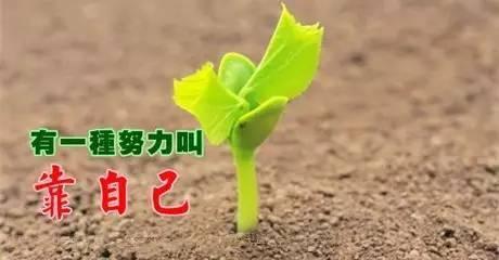 ppt 背景 壁纸 电脑桌面 发芽 绿色 绿色植物 嫩芽 嫩叶 新芽 植物图片