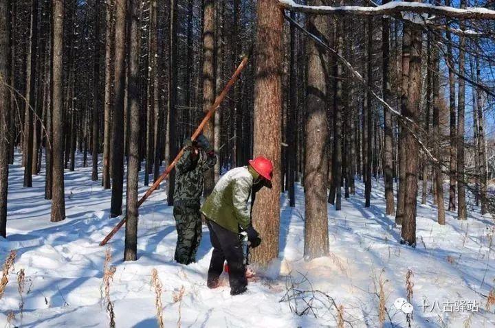 「旅游网样子」致敬大兴安岭林区开发建设者