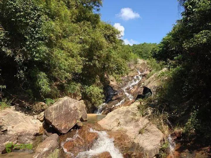 支付宝接入12306四年 积累蚂蚁森林能量已种树300万棵
