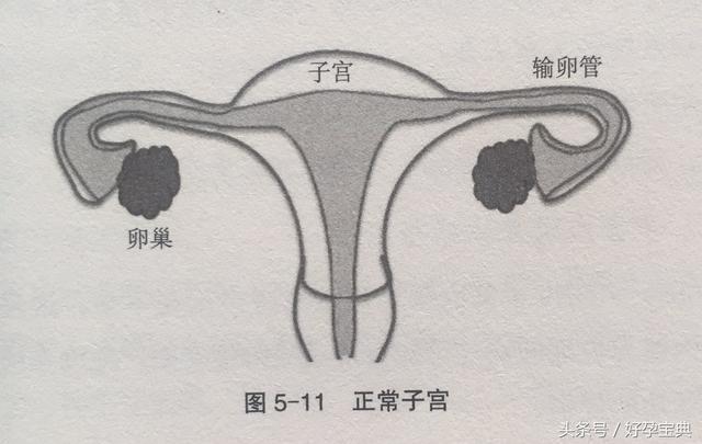 怀�9�#y.�_子宫畸形患者都不能怀孕吗