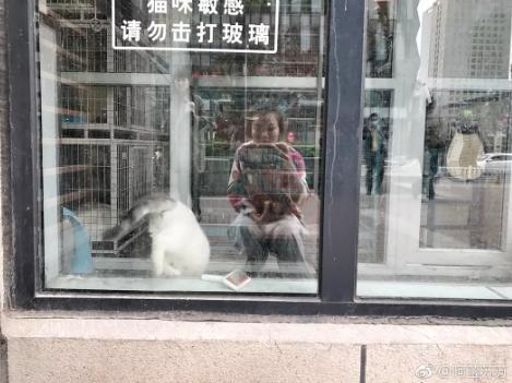 十二生肖为什么是这些动物?中国龙为什么没有排在首位?