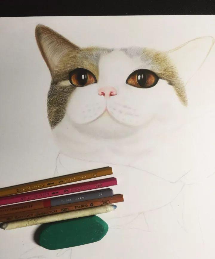 彩铅绘画教程:教你9步画出一只可爱的猫咪