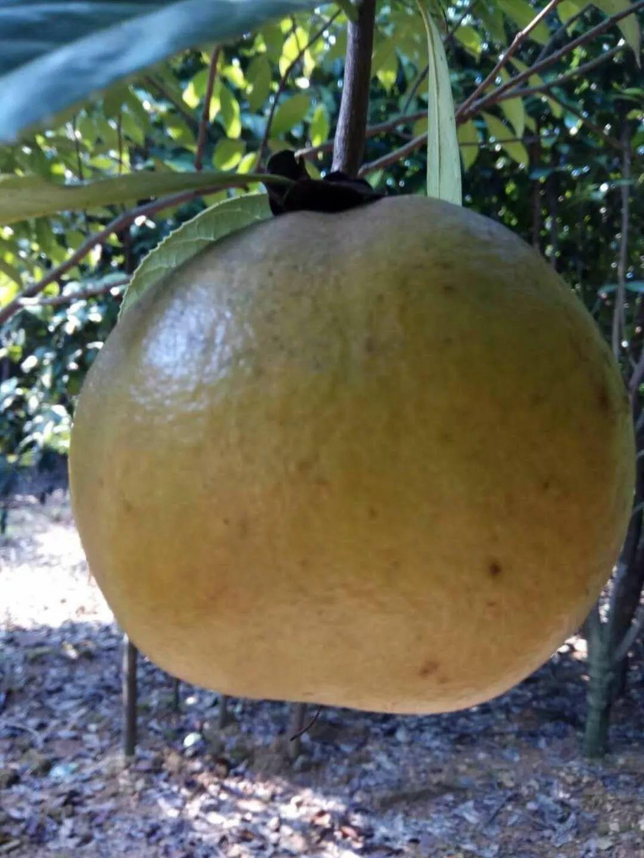6月吃水果好处多多,吃水果就要吃应季的,应季水果时间表