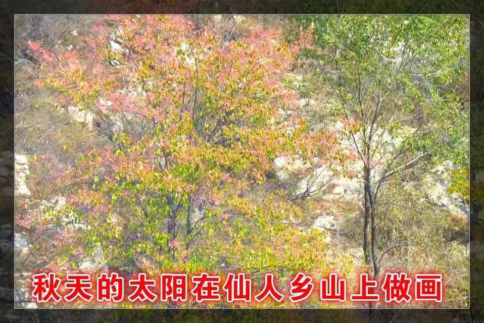 权威发布丨国际植物学大会公众报告&深圳论坛开放预约!