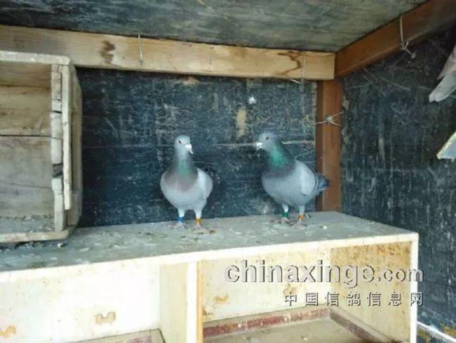 西成高铁已经试运营,什邡人4个小时刹拢西安,吃吃耍耍真开心!