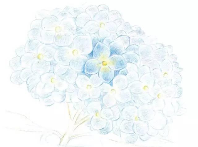 彩铅绣球花,简单易学