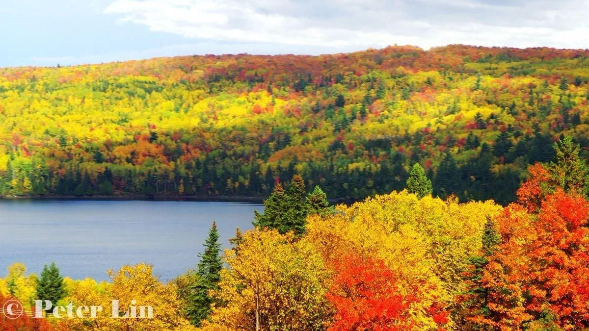 """这条加拿大最美枫叶之路,让人真正领略到""""层林尽染图片"""