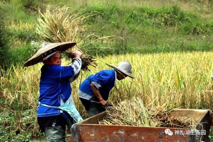 预计王大爷家今年_王大爷家计划出售一些稻谷.他了解到下面的市场信息:稻谷每千克3.