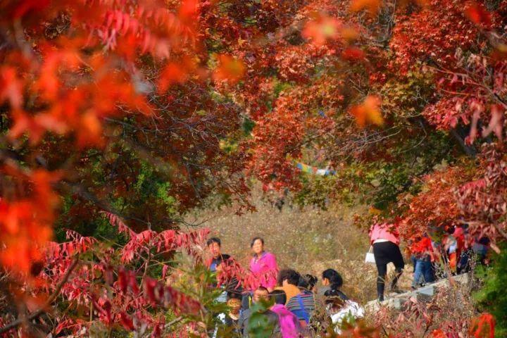 长相和林志玲相似,AV界的半壁江山,现在美貌已超林志玲?