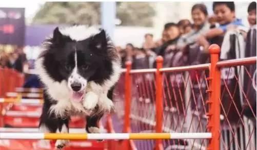 洲际赛第二日LPL豪取四连胜!熊猫为庆祝进入决赛将送出超级大礼