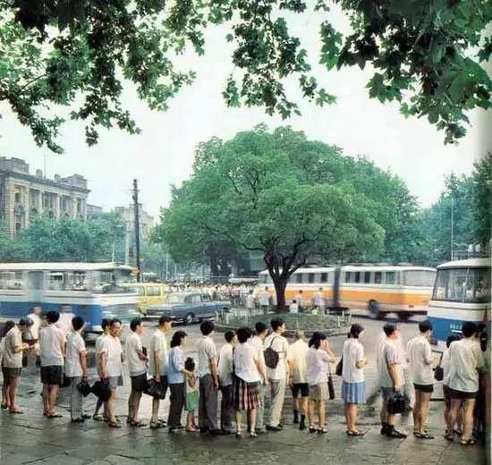 40个人手拉手才能围上一圈的猴面包树,真是世界罕见!