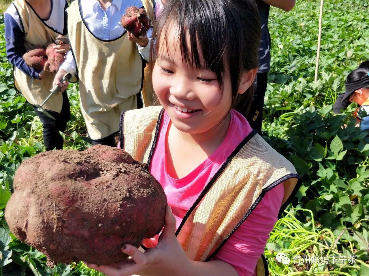 番薯学院【www.fanshuxueyuan.com】七大地网站目录