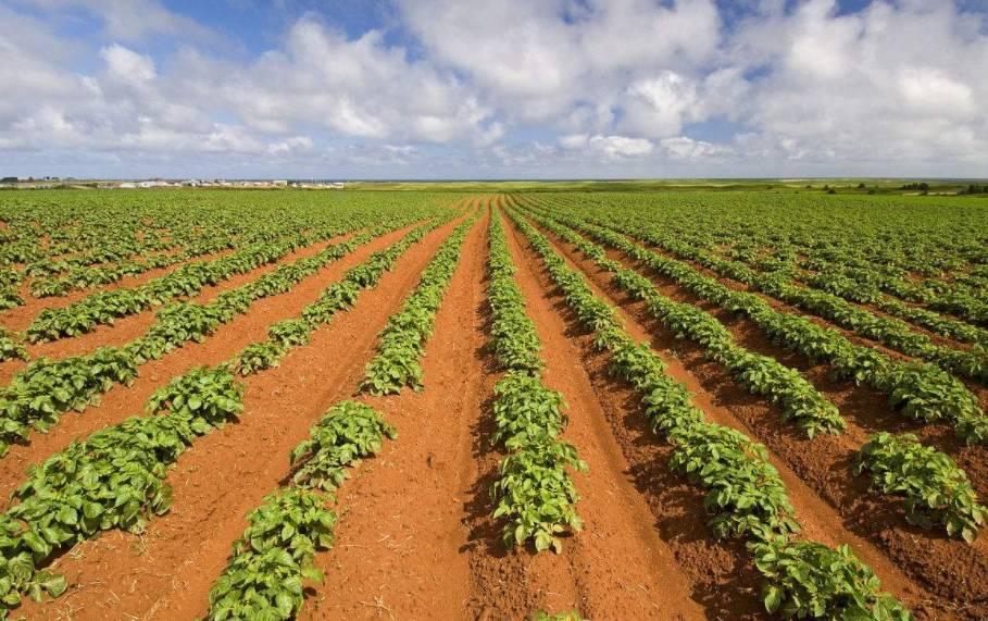 种地_老刀注:粮食补贴是国家为了提升农民种地的积极性而设置的一项鼓励性