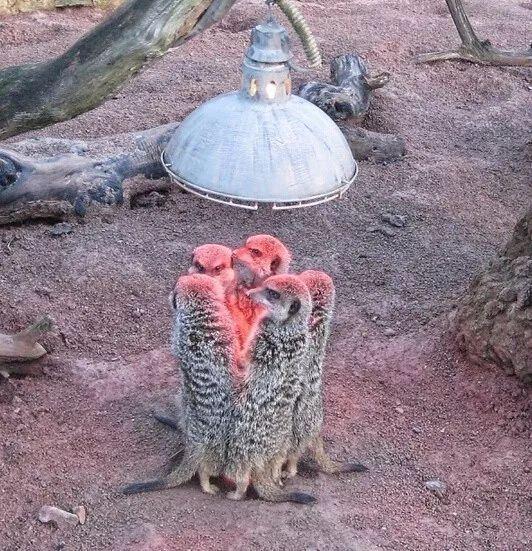 天气冷了之后,小动物们都是这样取暖的了