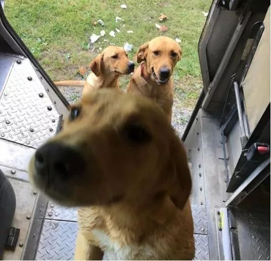成人三级撸狗网_一边送快递一边撸狗,啥也不说了我去当快递员了!