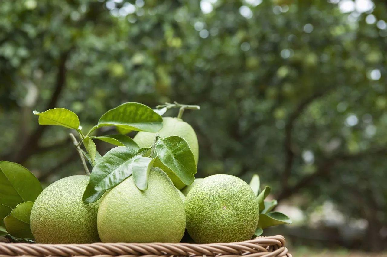 吃完柚子就扔皮 它还有这8种妙用 知道的人都说好