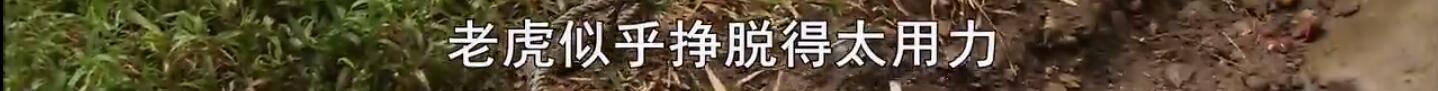 理想型老公PK, 陈伟霆,赵又廷,贾乃亮,黄磊,谁是你的菜?