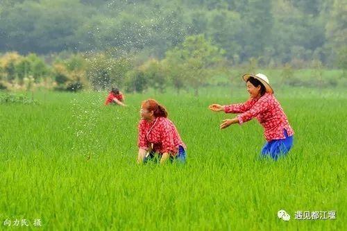 又是一年吃菌季!云南大理已有多人中毒住院