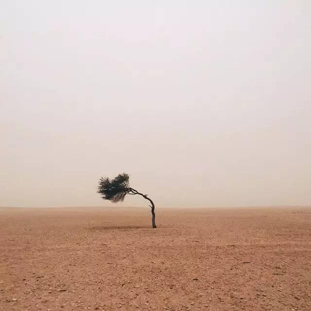 是树不懂爱,还是风太执着?(受益终生) - 清 雅 - 清     雅博客