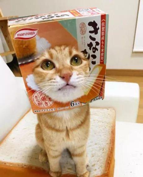 """""""真人版蜡笔小新""""出现在日本,网友:这头型叫""""尿包脸""""!"""