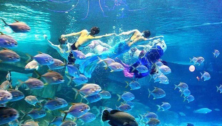 鱼类也具有专门的发电器官吗