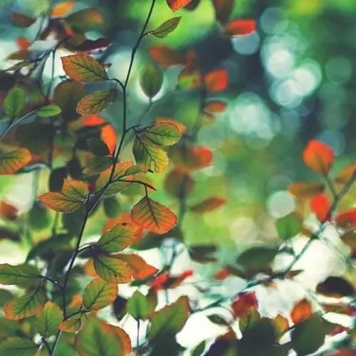 【校长感言48】古交市第二中学校长张拉民:用爱和尊重,书写新篇章
