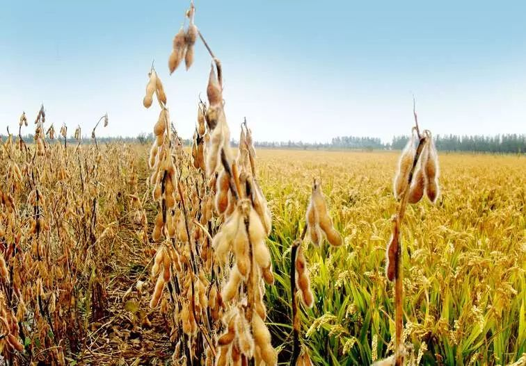 秋天手工制作丰收豆子