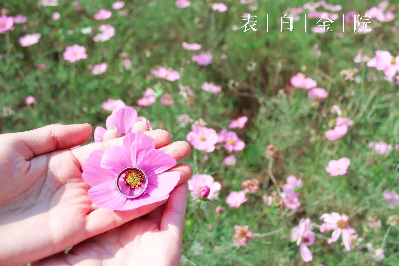 """央视《走进科学》""""百草之王""""人参祛病养生缘于人参皂苷RH2"""