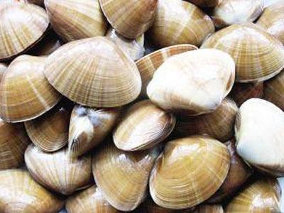 蛤蜊壳手工制作小动物
