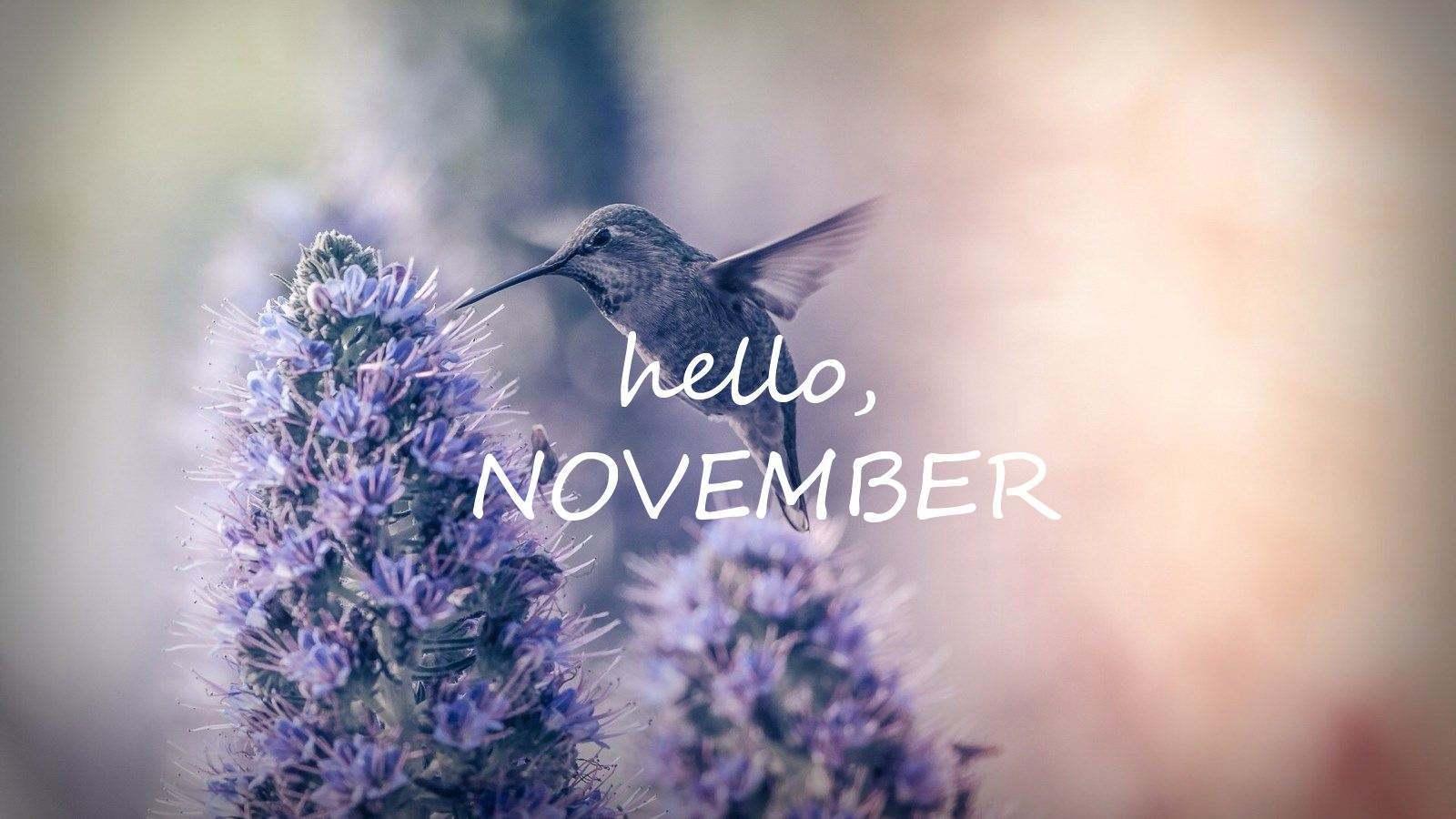 關于十一月的唯美句子 十一月你好的qq說說句子