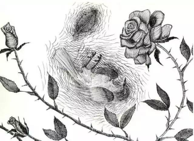 夜莺与玫瑰英文朗�_——《夜莺与玫瑰》