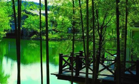 卧虎藏龙拍摄地 浙江安吉大竹海图片
