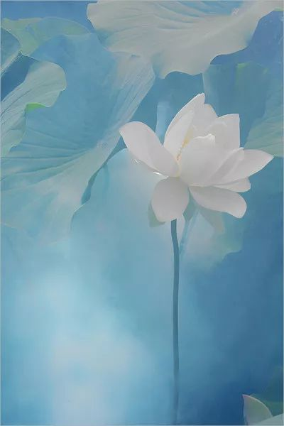 折莲花的步骤图解
