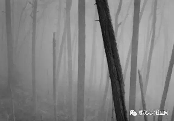 """深圳保监局整治车险怪象 """"送礼""""和无牌照互联网平台将被严打"""