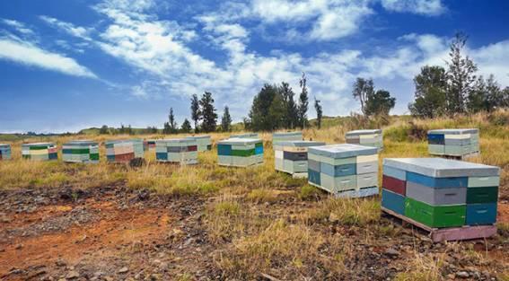 开团_仅需148元500g独一无二国宝级蜂蜜首次特惠促销!