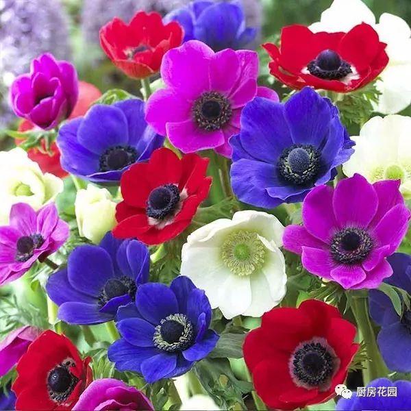 手绘花卉素材粑粑花